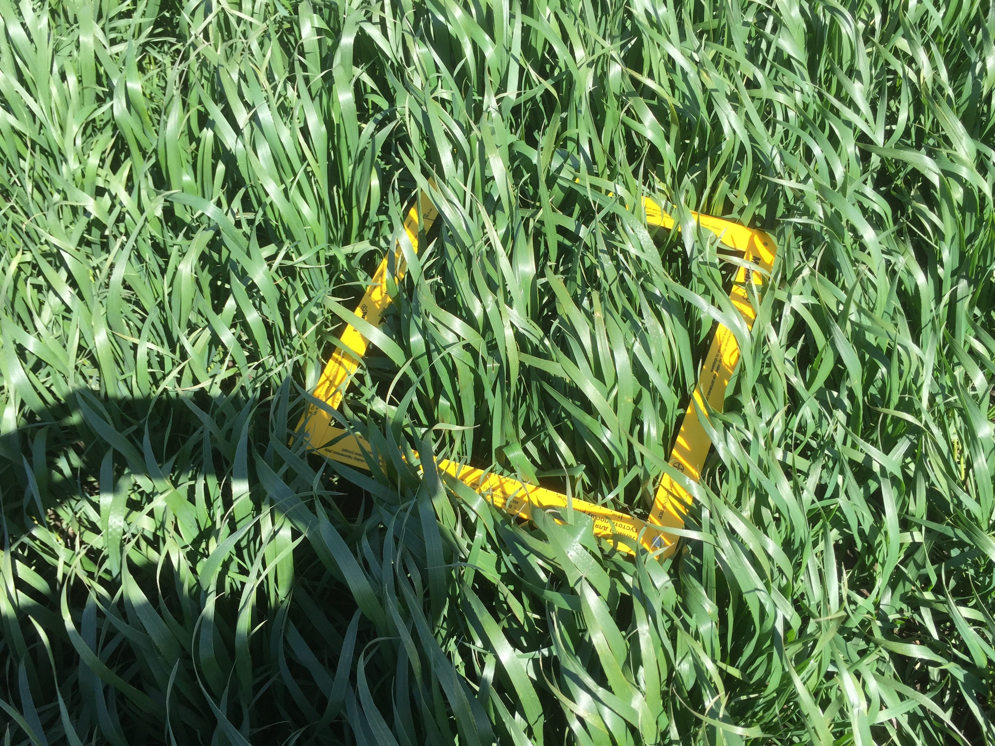 посев озимой пшеницы