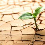 Сколько влаги необходимо для стабильного получения  запланированного урожая