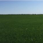 Жизнь поля #5 - Засуха